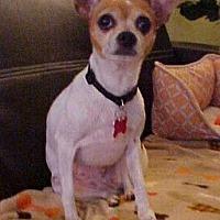 Adopt A Pet :: Lily - 7 lbs - Dahlgren, VA