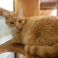 Adopt A Pet :: Gordon - Park Rapids, MN