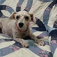 Adopt A Pet :: Bonnie - Mukwonago, WI