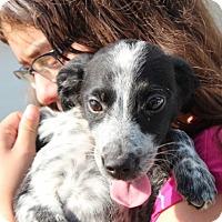 Adopt A Pet :: Tracy - Harmony, Glocester, RI