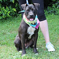 Adopt A Pet :: Roxy - McCormick, SC