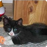 Adopt A Pet :: Arrow - Jenkintown, PA