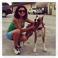 Adopt A Pet :: Scout - Sarasota, FL
