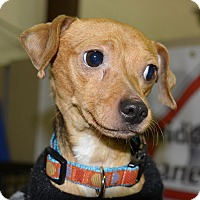 Adopt A Pet :: Brady - Meridian, ID