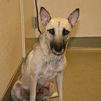 Adopt A Pet :: Maxine - Wildomar, CA