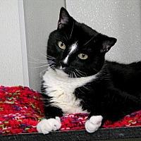 Adopt A Pet :: Tuxedo - Stamford, CT