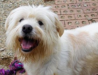 Terrier (Unknown Type, Medium) Mix Dog for adoption in Spartanburg, South Carolina - Oscar of Union