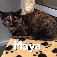 Adopt A Pet :: Maya - Pittsburgh, PA