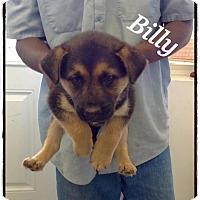 Adopt A Pet :: Billy - Tampa, FL