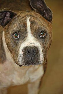 Terrier (Unknown Type, Medium) Mix Dog for adoption in Cranston, Rhode Island - Tick