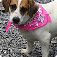 Adopt A Pet :: Molly - West Grove, PA