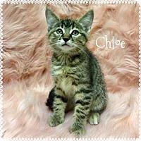 Adopt A Pet :: Chloe - Jasper, IN