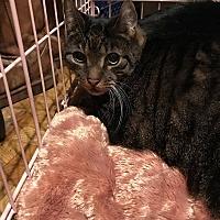 Adopt A Pet :: OC - Manchester, CT