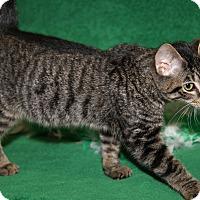 Adopt A Pet :: Scotty - Marietta, OH