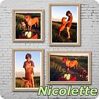 Adopt A Pet :: Nicolette - Bakersfield, CA