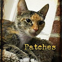 Adopt A Pet :: Patches - Euclid, OH