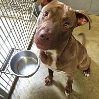 Adopt A Pet :: Tonto - Jackson, MI