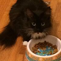 Adopt A Pet :: Rhiannon - Nashville, TN