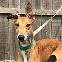 Adopt A Pet :: PJ COLD WATER - Grandville, MI