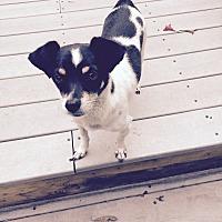 Adopt A Pet :: Buddy - Barnegat, NJ