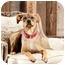 Photo 2 - German Shepherd Dog/Shar Pei Mix Dog for adoption in Portland, Oregon - Quetee