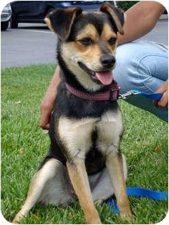 Shepherd (Unknown Type) Mix Dog for adoption in San Dimas, California - Zoe