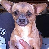 Adopt A Pet :: Camelia - Studio City, CA