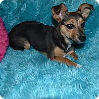 Adopt A Pet :: Sabrina - Hagerstown, MD
