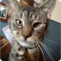 Adopt A Pet :: Ziggy - Wenatchee, WA