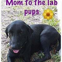 Adopt A Pet :: Lacey - Charlestown, RI