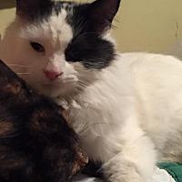 Adopt A Pet :: Toby - North Branch, MI