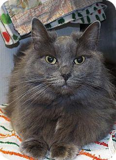 Domestic Longhair Cat for adoption in Grants Pass, Oregon - Jasmine