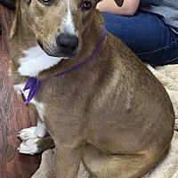 Adopt A Pet :: Buttercup - Kaufman, TX