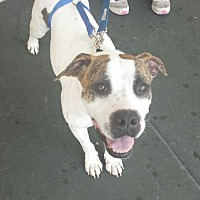 Adopt A Pet :: Rebel - Tampa, FL