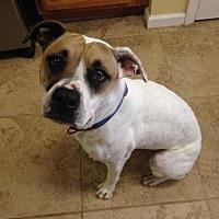 Adopt A Pet :: Duchess - Florida - Fulton, MO