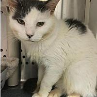 Adopt A Pet :: Victor - Herndon, VA
