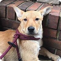 Adopt A Pet :: Kandi - CUMMING, GA