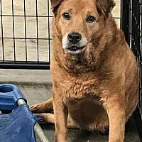 Shepherd (Unknown Type) Mix Dog for adoption in Jackson, Mississippi - Penny