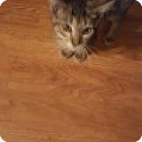 Adopt A Pet :: Eddie - McHenry, IL
