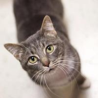 Adopt A Pet :: *Gabriella - Sioux Falls, SD