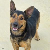 Adopt A Pet :: Keith - Georgetown, TX