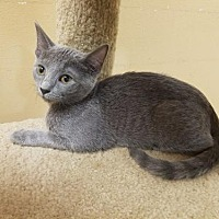 Adopt A Pet :: Bluebell - Capshaw, AL