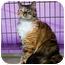 Photo 2 - Domestic Longhair Cat for adoption in Sacramento, California - Laura L