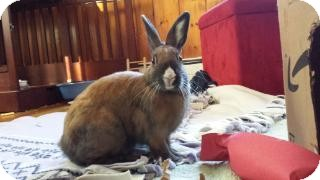 Other/Unknown Mix for adoption in Woburn, Massachusetts - pumpernickel
