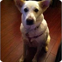 Adopt A Pet :: Rilla - Pending - Vancouver, BC