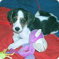 Adopt A Pet :: Suzie - Minneola, FL