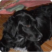 Adopt A Pet :: Onyx - Newport, VT