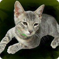 Adopt A Pet :: Derek - The Colony, TX