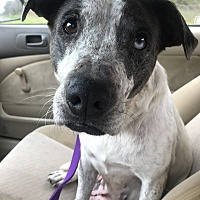 Adopt A Pet :: Mila - Jackson, MS