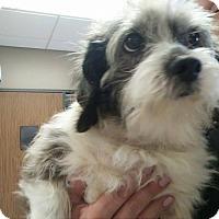Adopt A Pet :: Winston - West Warwick, RI
